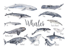 Load image into Gallery viewer, Whales - Educational Card - Learning by Playing Materials
