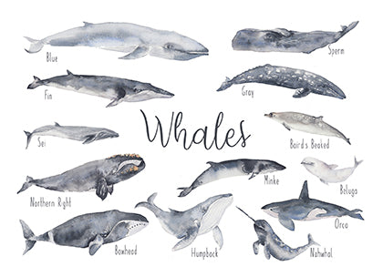 Whales - Educational Card - Learning by Playing Materials