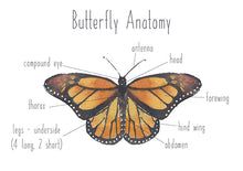 Load image into Gallery viewer, Butterfly Anatomy - Educational Card - Learning by Playing Materials