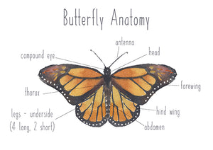 Butterfly Anatomy - Educational Card - Learning by Playing Materials