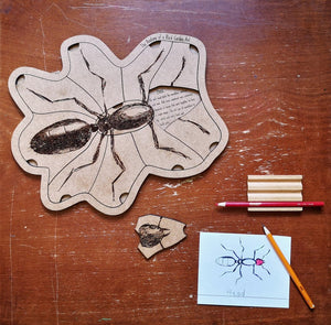 Anatomy of a Black Garden Ant Puzzle - Montessori Learning by Playing Materials