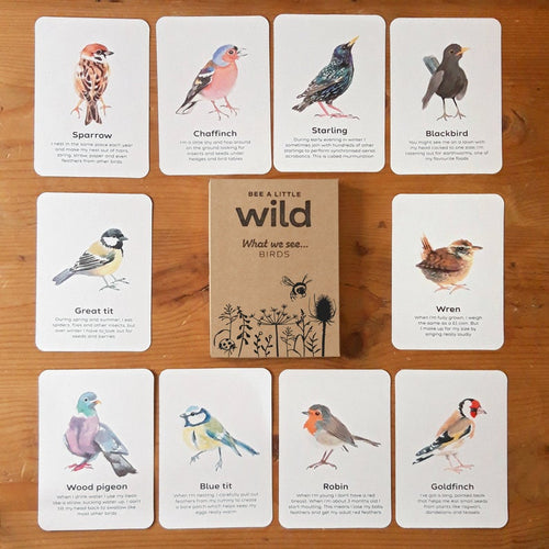 Birds Educational Cards Set- Flashcards Learning by Playing Materials