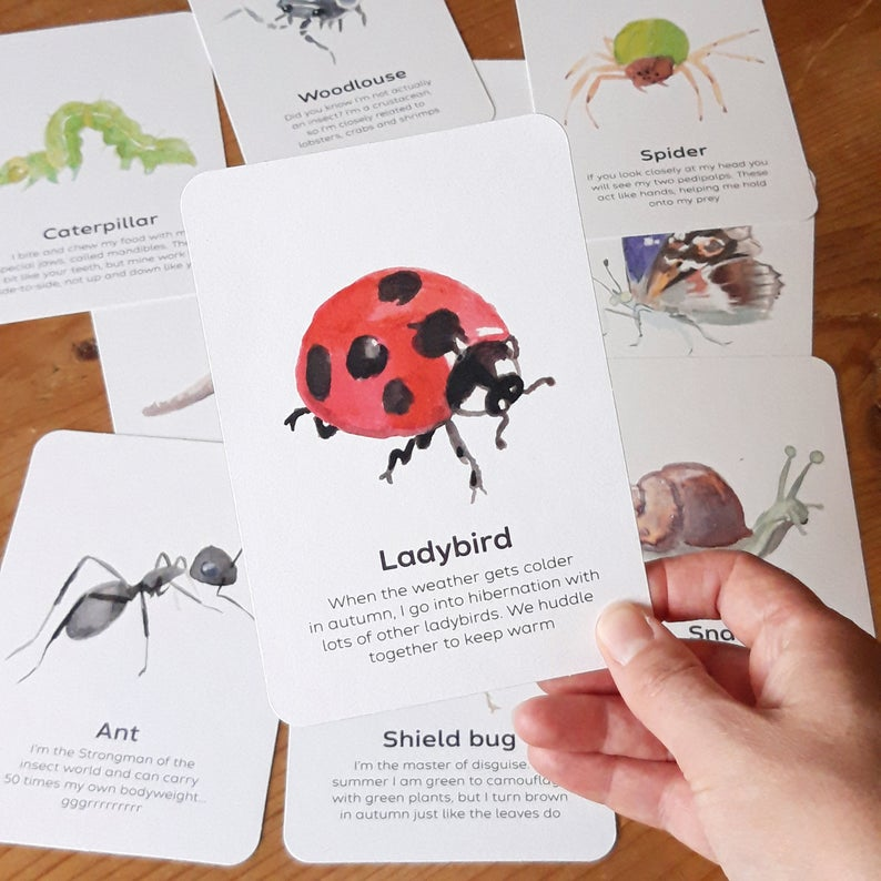 Minibeasts Educational Cards Set- Flashcards Learning by Playing Materials