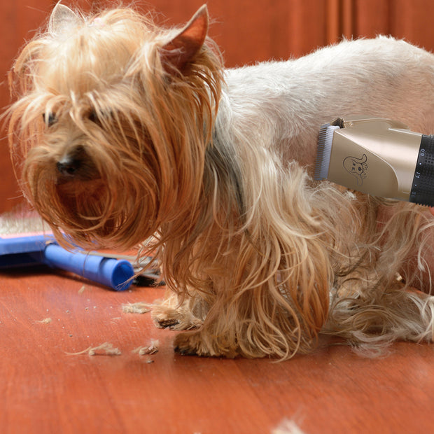 Rechargeable Pet Hair Trimmer {Free Shipping} - URANIFY