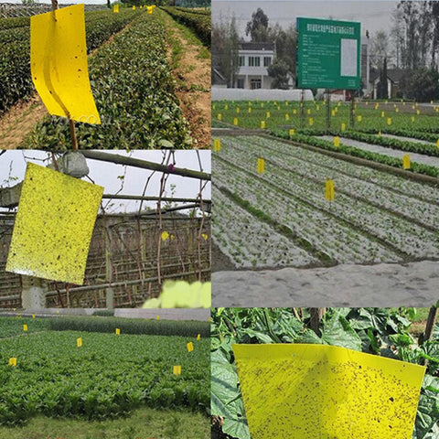 Strong Powerful Sticky Board Greenhouse Is Orchard Courtyard for Yellow Paper and Mucus Pest Control Garden Tools