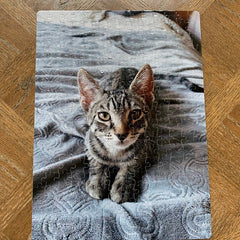 Custom Pet Photo Puzzle, WITH YOUR OWN PHOTO