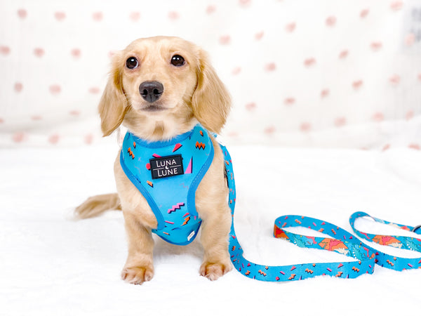 Bundle - Retro Dino Dog Reversible Harness & Leash