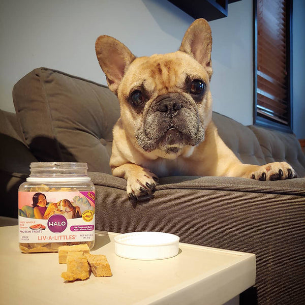 Liv-A-Littles Freeze-Dried Wild Salmon Protein Treats