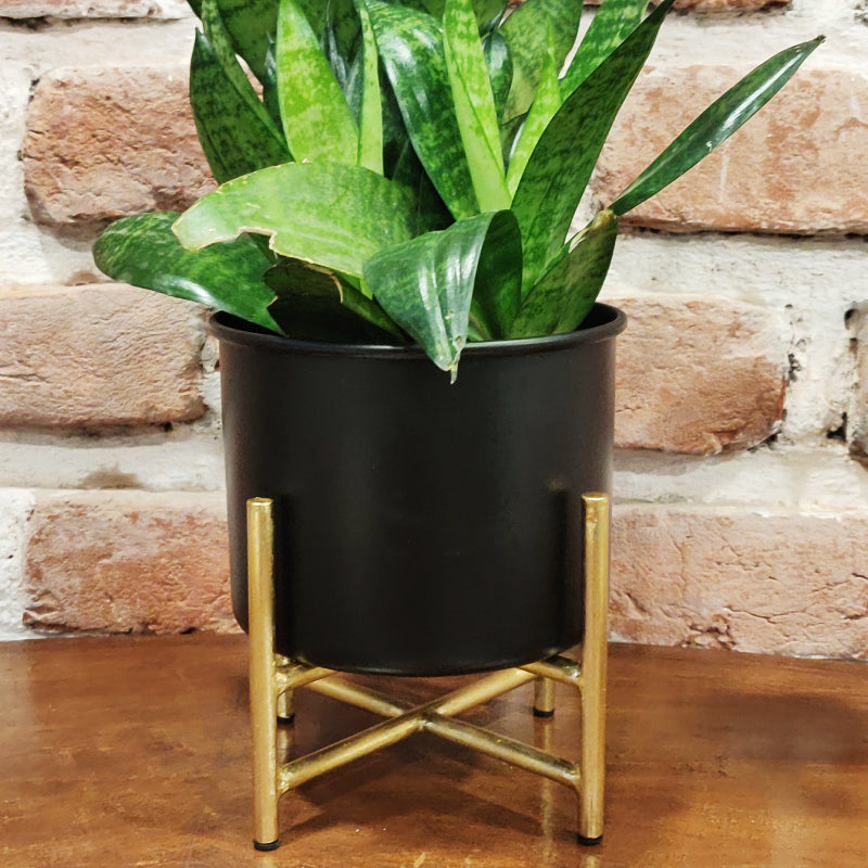 black and gold desk planter with stand vara store 1