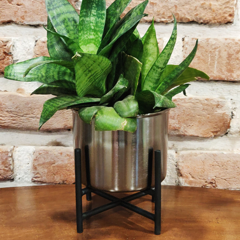 twin planter with stand nickel finish vara store 1