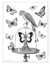 Load image into Gallery viewer, Alibabette Editions - Engraving to colour, Curiosities