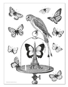 Alibabette Editions - Engraving to colour, Curiosities