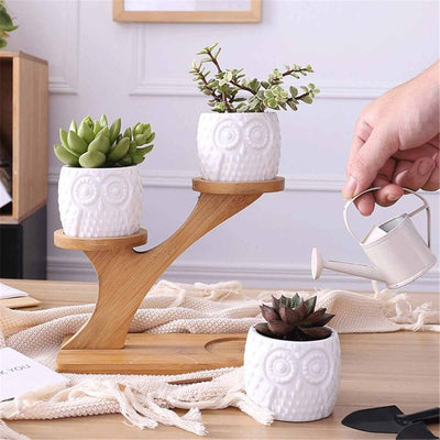 Owl Succulent Planter Shelf Set