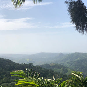 A view from the jungle in Puerto Rico