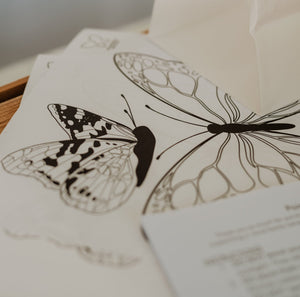 Home Release Kit - Painted Lady Butterflies