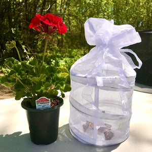 Special Gift Set - Mixed Butterfly Release Kit - Special Edition Package
