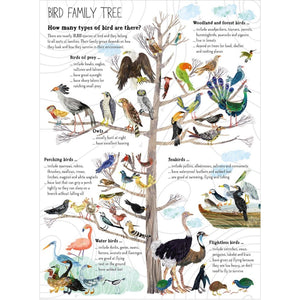 The Big Book of Birds | Children's Picture Book on Birds