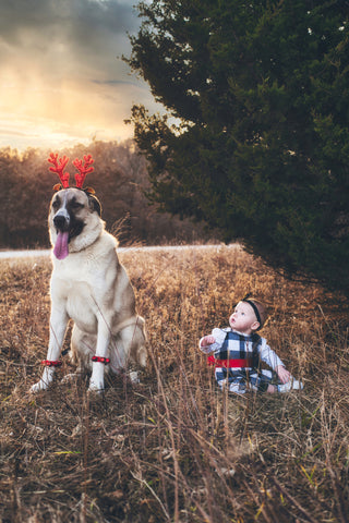 Dog and baby portrait