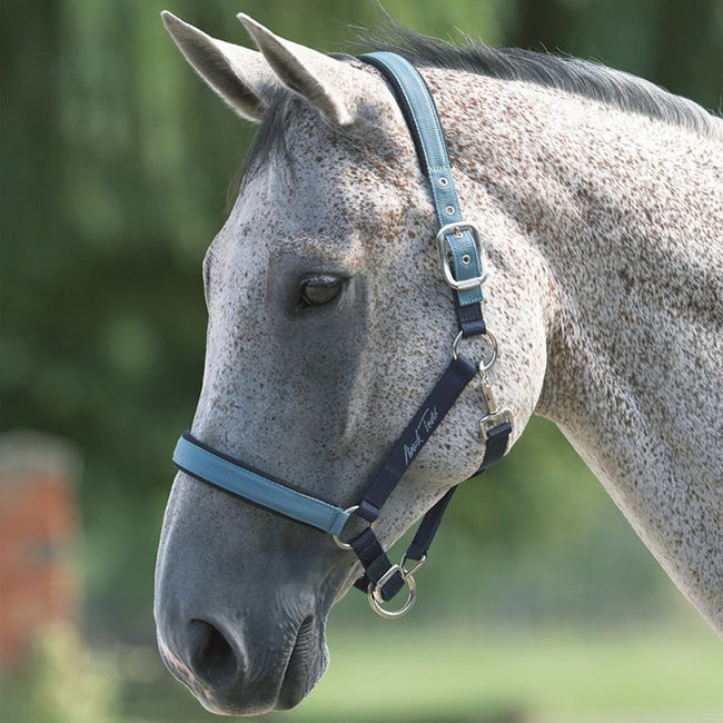 Yellow - Front - Mark Todd Deluxe Padded Headcollar With Lead Rope