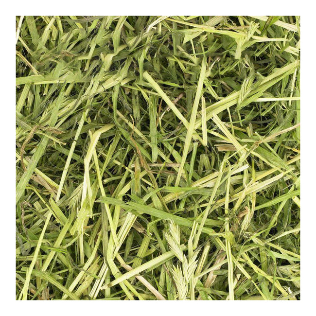 May Vary - Back - Friendly Readigrass - Hay Alternative