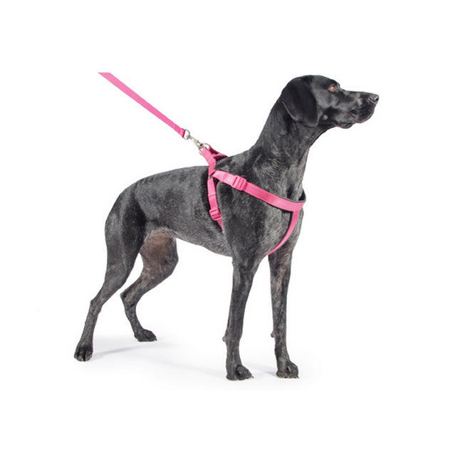 Pink - Front - Ancol Pet Products Padded Dog Exercise Harness