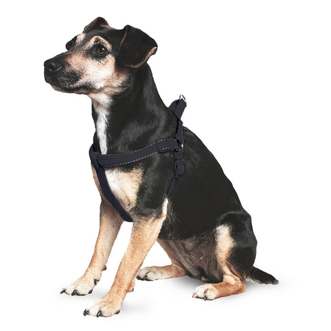 Black - Front - Ancol Pet Products Padded Dog Exercise Harness