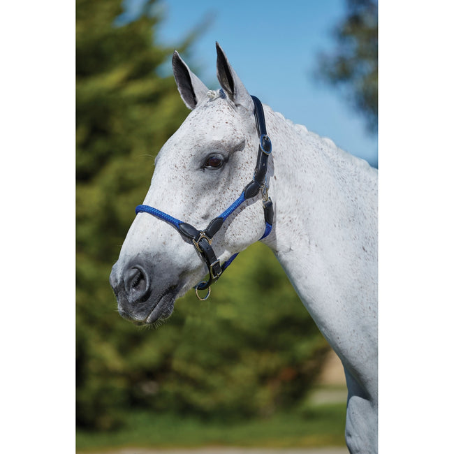 Blue - Back - Kincade Leather Rope Headcollar