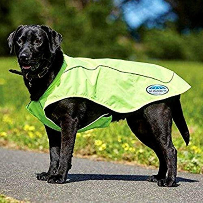 Yellow - Back - Weatherbeeta Reflective Exercise Dog Coat