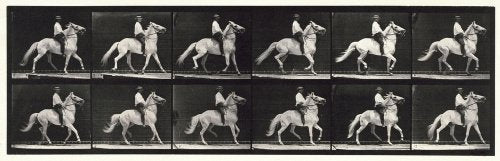 Ambling, (single foot); bareback; white horse Clinton; from 'Animal Locomotion. An Electro-Photographic Investigation of Consecutive Phases of Animal Movement 1872-1885'