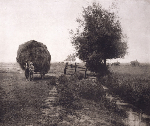 In the Haysel, from a portfolio of 'Pictures of East Anglian Life'
