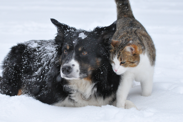 Top Tips for nourishing your pet's dry skin this winter