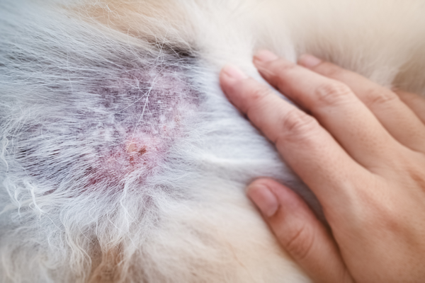 NATIONAL ECZEMA WEEK: CANINE & FELINE DERMATITIS