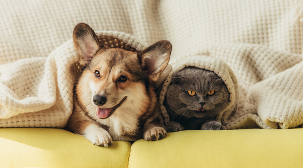 How to manage your pet's allergies, naturally