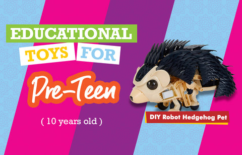Educational Toys for 10 Year Olds - Hedgehog
