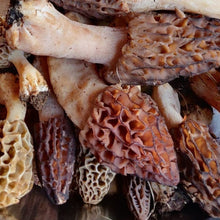 Load image into Gallery viewer, Wild Organic Morel Mushroom