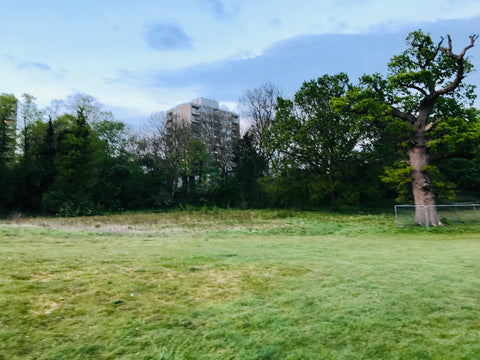 The site of the old chipping green at Richmond Park Golf Club
