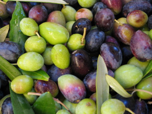 Olive Oil Consumption Grows