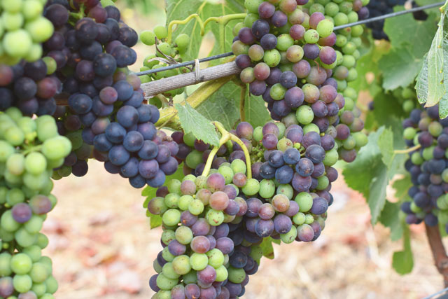 McEvoy-Ranch-Verasion