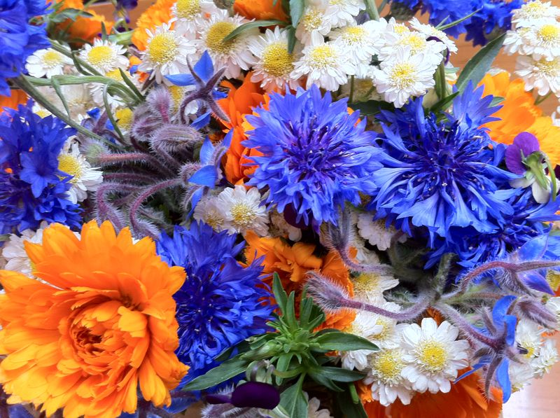 calendula, feverfew and bachelor buttons are edible flowers
