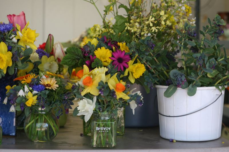 freshly cut spring flowers at mcevoy ranch