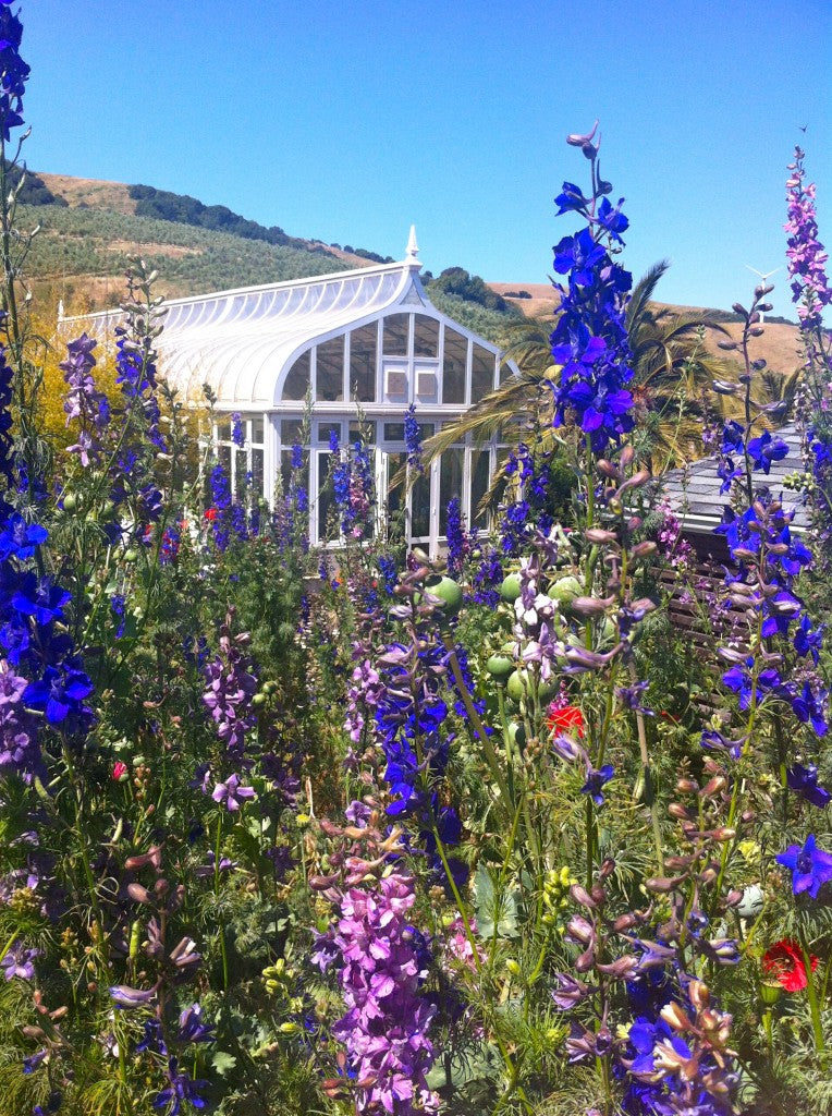 larkspur_greenhouse