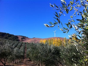 Autumn in the orchards