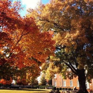 Fall colors are vibrant outside the Johnston Y.