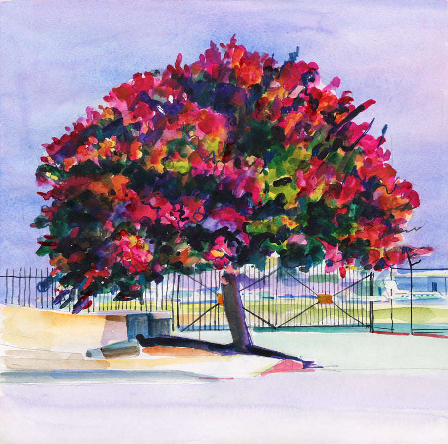 'Red Riot Tree near Van Nuys Airport'
