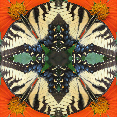 Butterfly Mandala by Amy and Christopher Allen-Baker