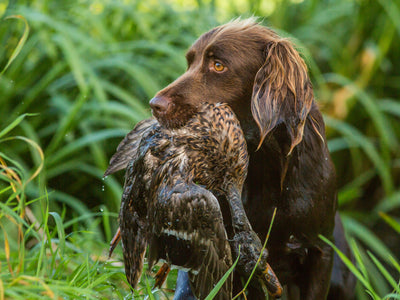 Packing List for an Unbeatable Duck Hunt