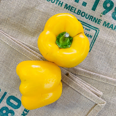 Capsicum, yellow (each)