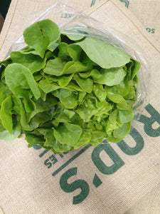 Gourmet lettuce- green (each)