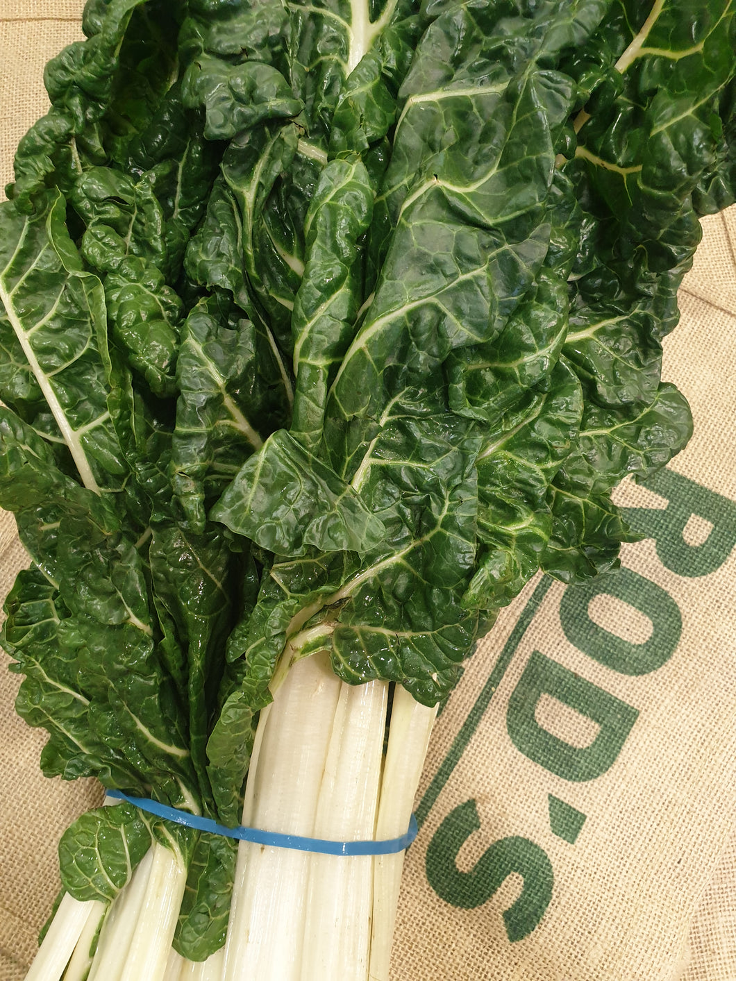 Silverbeet (bunch)