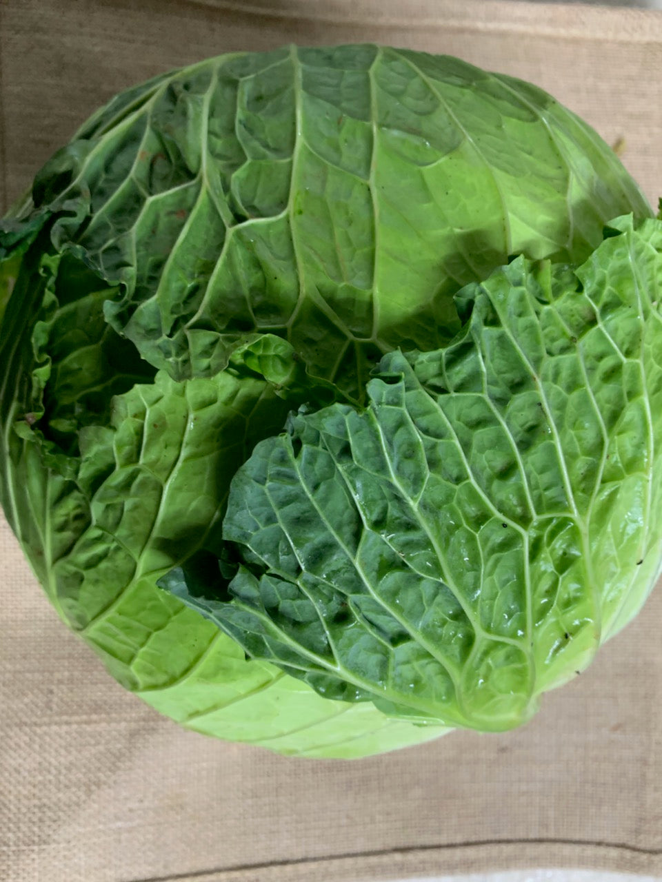 Cabbage, Savoy (whole)